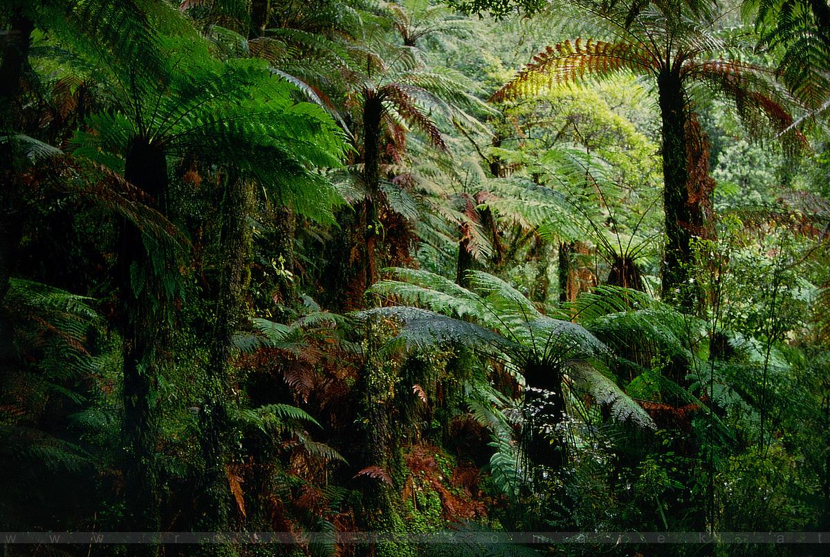 Fairyland - Lake Matheson / New Zealand 1994