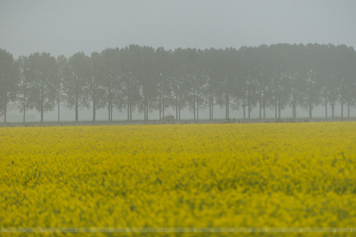 Oilseed Rape - Netherlands 2014