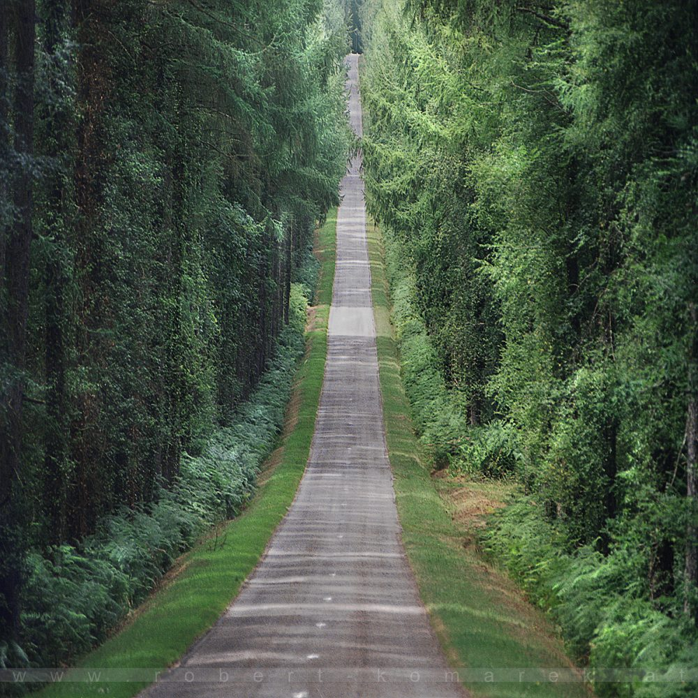 Straight Down - Forêt de Paimpont, Bretagne / France 2003