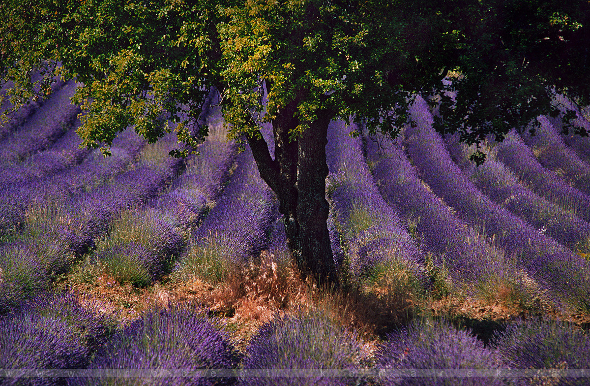 Arôme - Sault, Provence / France 2004