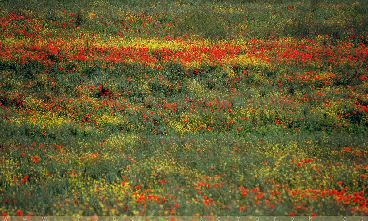 Claude's Italian Place - La Foce, Tuscany / Italy 1999