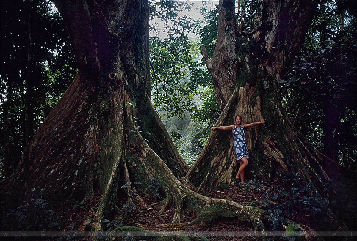 God's Garden - Giant Trees of Sans Souci, Mahé / Seychelles 1998