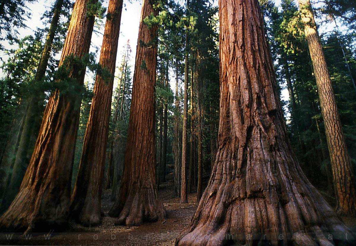 Breathless - Yosemite NP, California / U.S.A. 1992